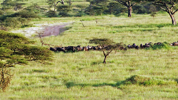 Image of the Serengeti.