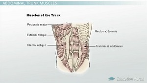 Abdominal Trunk Muscle
