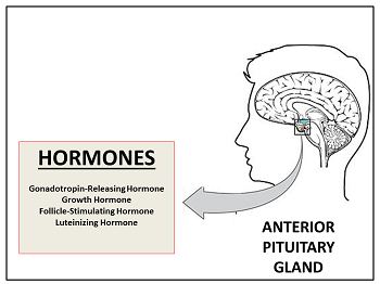 academy lesson hormones pituitary terminology