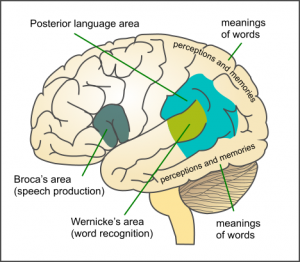 what is aphasia? - definition, types & treatment | study, Skeleton