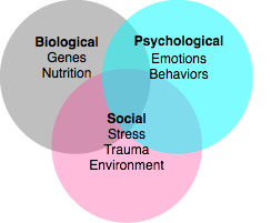 the biopsychosocial model health and social care essay The biopsychosocial perspective of depression  in illness and health care  on physical and social conditions the biopsychosocial model and.