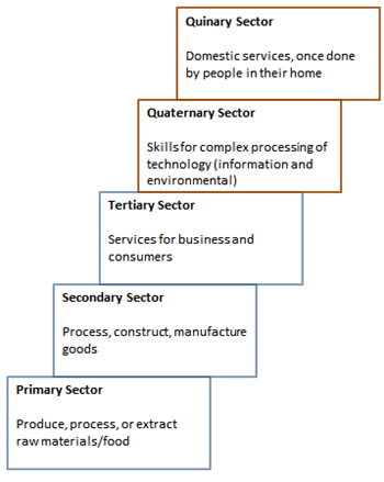 quinary sector of industry: definition & examples - video & lesson, Human Body