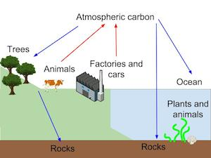Essay on carbon cycle