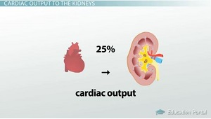 Cardiac Output Percentage