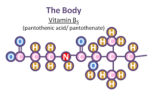 Vitamin B5 structure- body of the beast