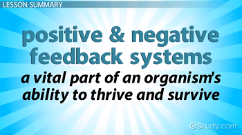 The role of positive and negative feedback systems