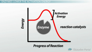 Enzyme Activation Energy Graph
