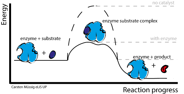 Mrs. Mazzuca's Honors Biology Blog: Enzymes... and Pac Man
