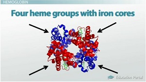 Four Heme Groups
