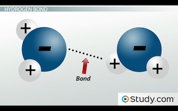 representation of dotted line between hydrogen bonds