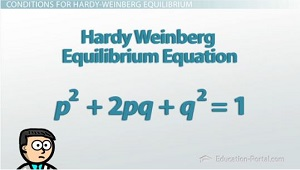 Hardy-Weinberg Equilibrium Equation
