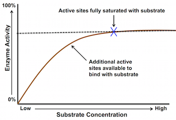 the effect of substrate concentration on an enzyme catalyzed reaction The rate of an enzyme-catalysed reaction depends on the concentrations of enzyme and substrate as the concentration of either is increased the rate of reaction increases for a given enzyme concentration, the rate of reaction increases with increasing substrate concentration up.