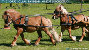 Horse Collars Harnesses