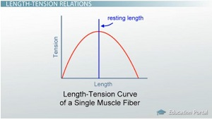 Length-Tension Curve