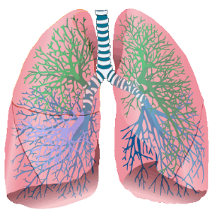 Our Body: Respiratory and Circulatory Systems | Santiago ...
