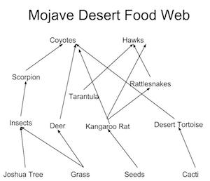 Worksheets Create A Food Web Worksheet the food web of mojave desert study com unlock content