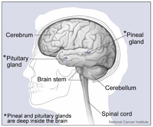 brain cancer: treatments & side effects | study, Human Body