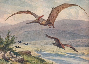 pteranodon facts lesson for kids study com