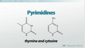 Pyrimidine Types