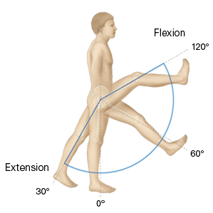 what is range of motion (rom)? - definition, types, testing, Skeleton