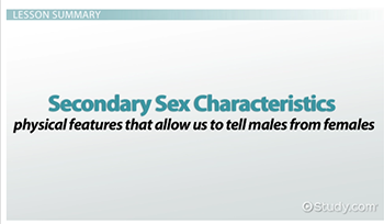 secondary sex characteristics