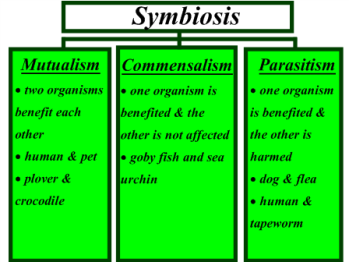 Commensalism Science Definition For Kids