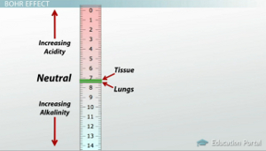 Tissue Lung pH Scale