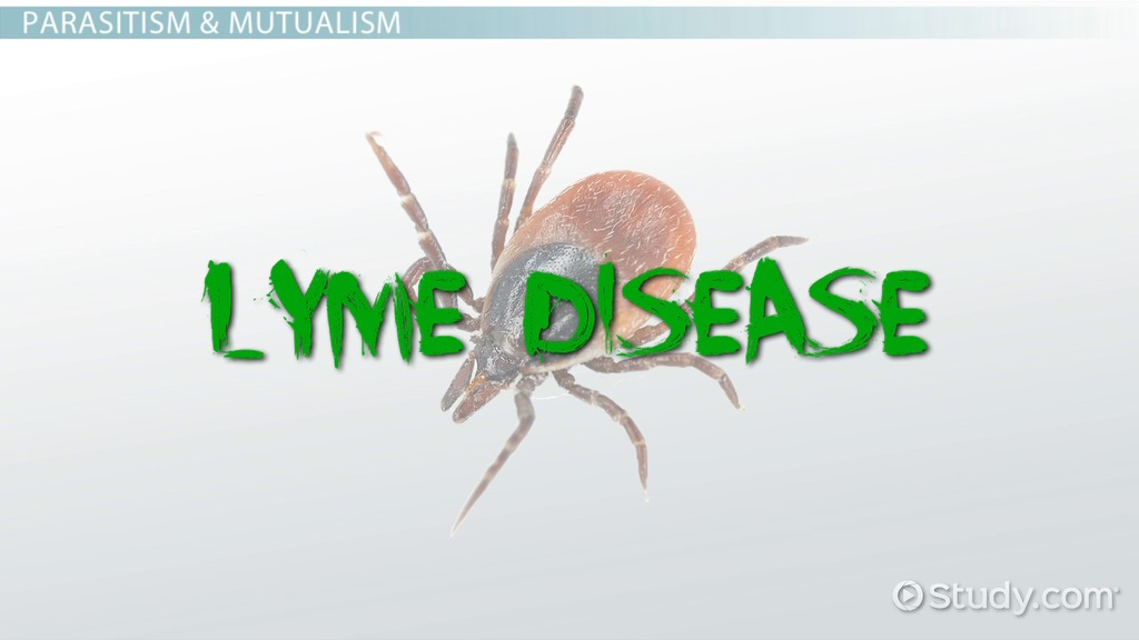 What Is A Parasite Definition Types Examples Video Lesson