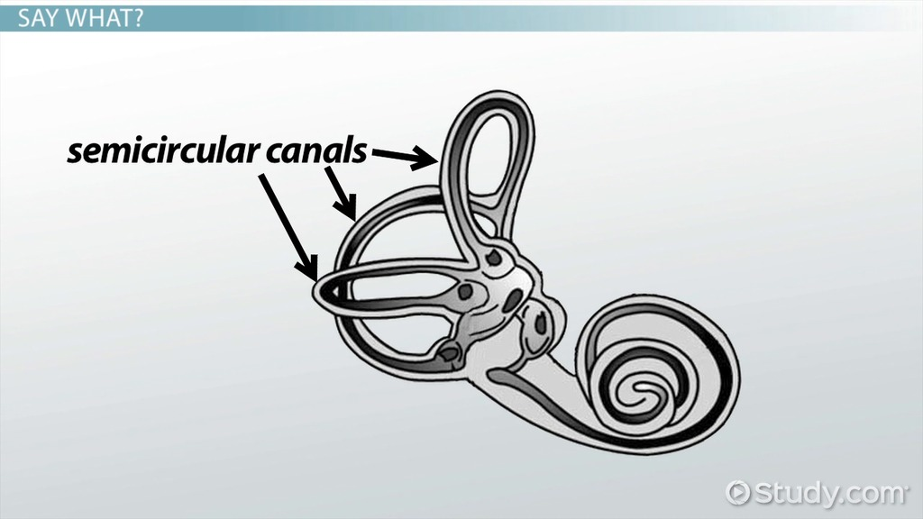 the pros and cons of cochlear prosthesis Brazilian journal of otorhinolaryngology cochlear implantation is a safe and evaluation of subjects presently fitted with implanted auditory prosthesis.