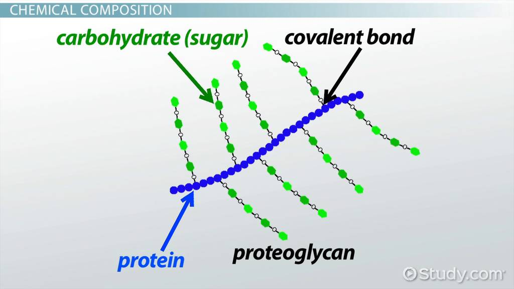 proteoglycans definition function amp structure video