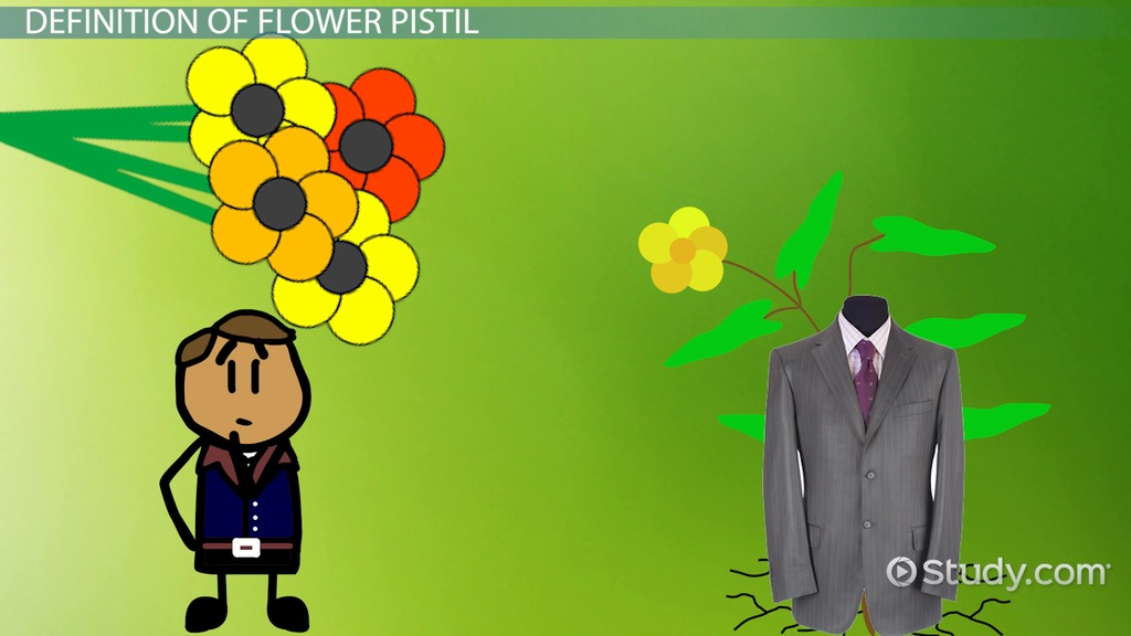 Anther Of A Flower Function Definition Video Lesson