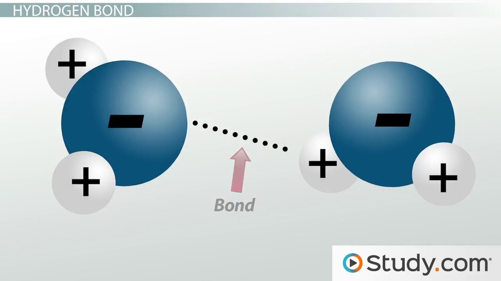 Hydrogen Bonding Dipole Dipole Ion Dipole Forces Strong
