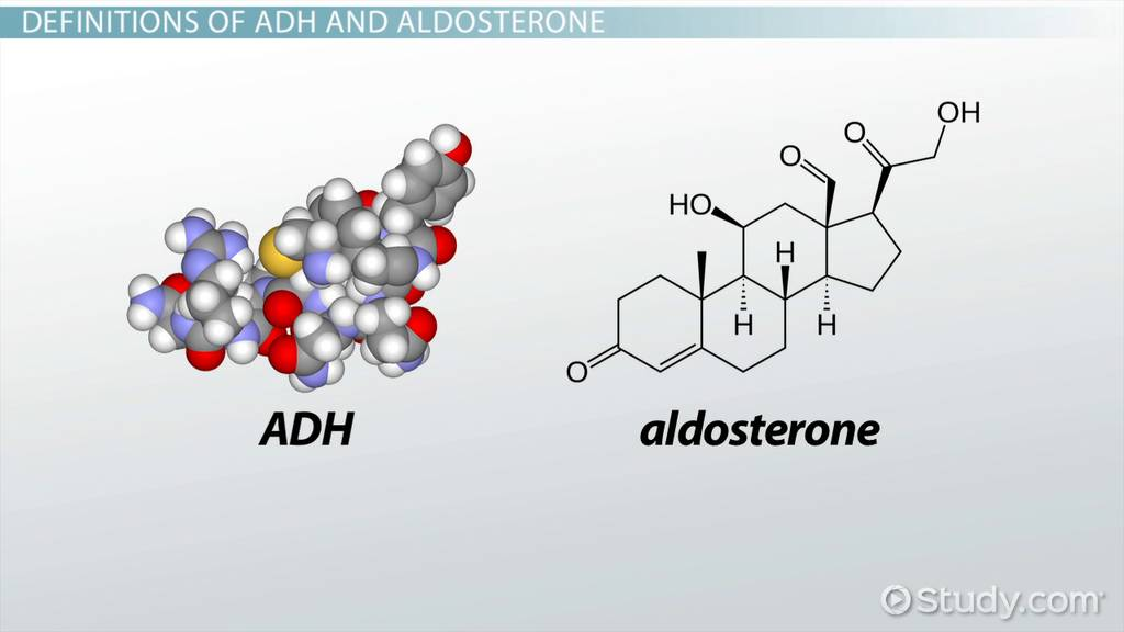 the differences between adh  u0026 aldosterone