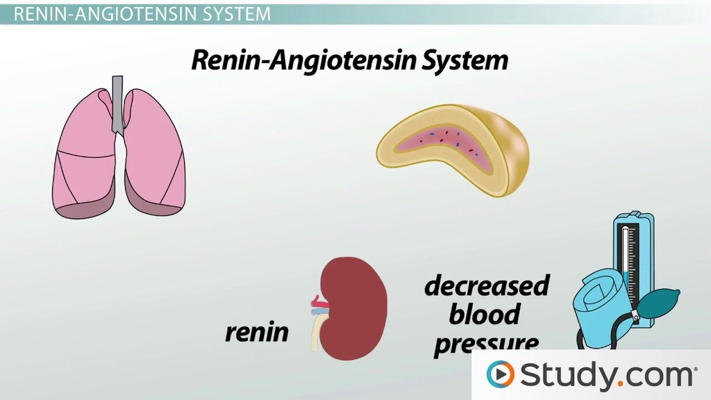 The Endocrine System Videos Lessons Study