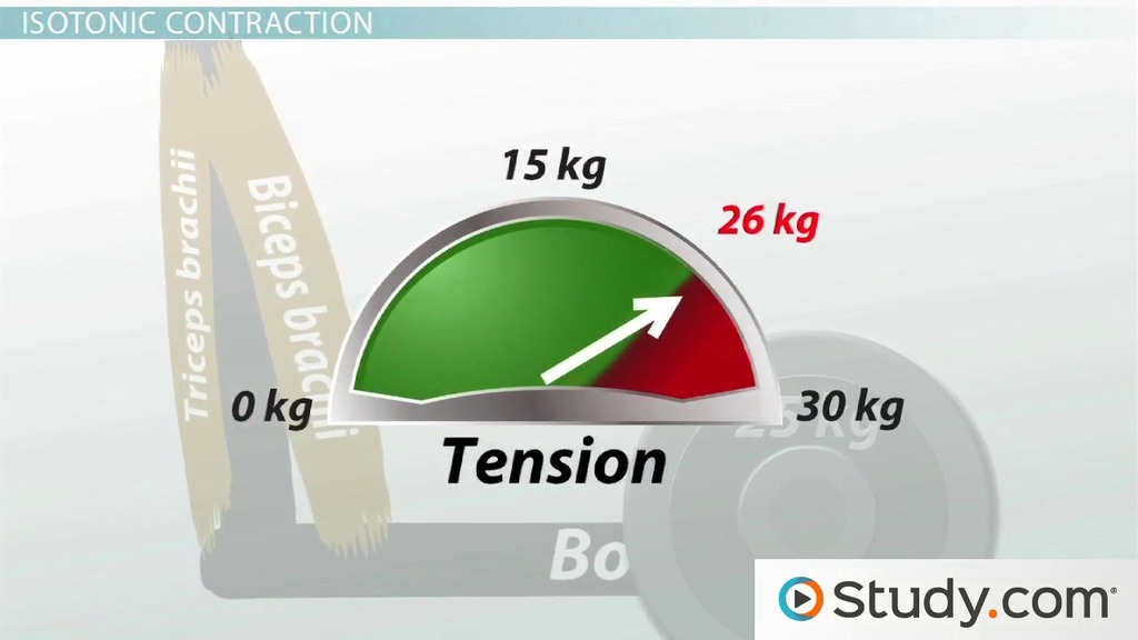 isometric and isotonic contraction  definition and