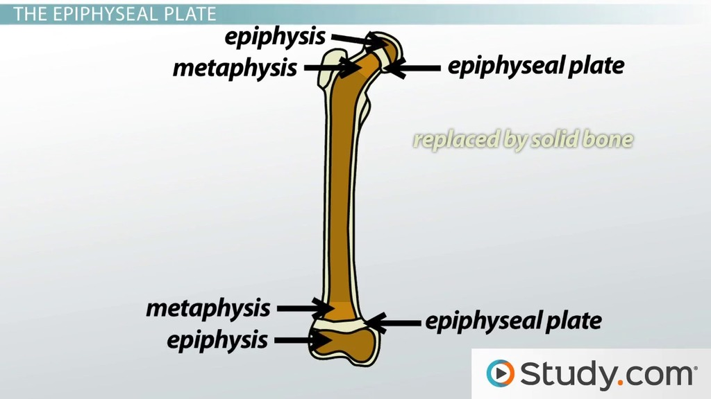 Skeletal System Videos Lessons Study