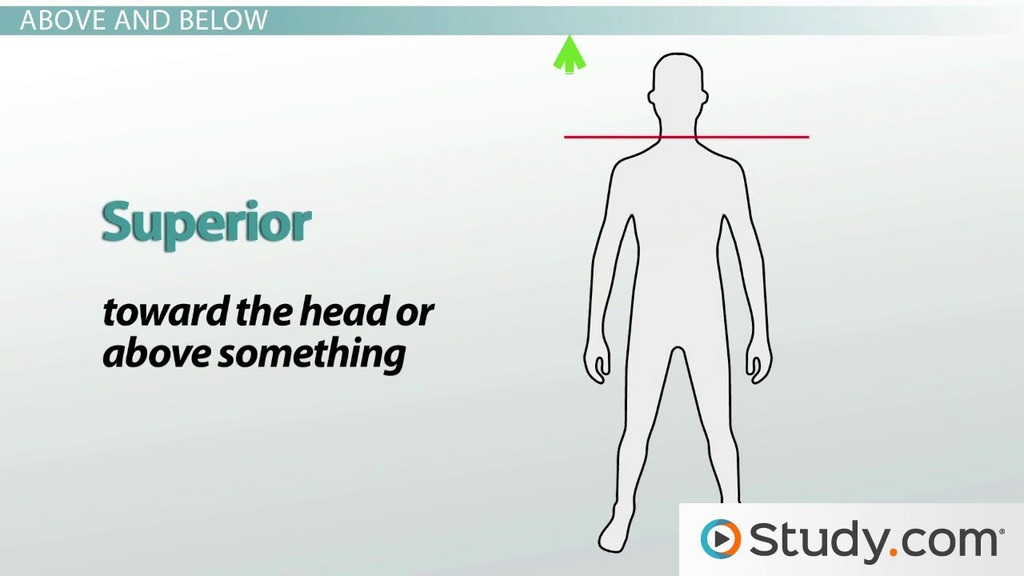 Anatomical Directional Terminology: Lateral, Medial & More - Video ...