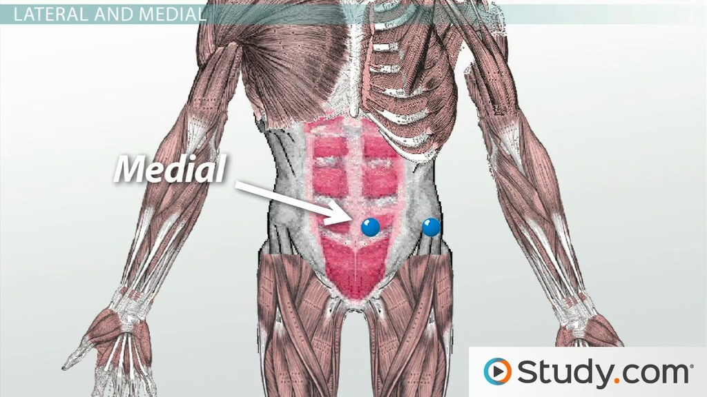 Anatomical Directional Terminology Lateral Medial More Video
