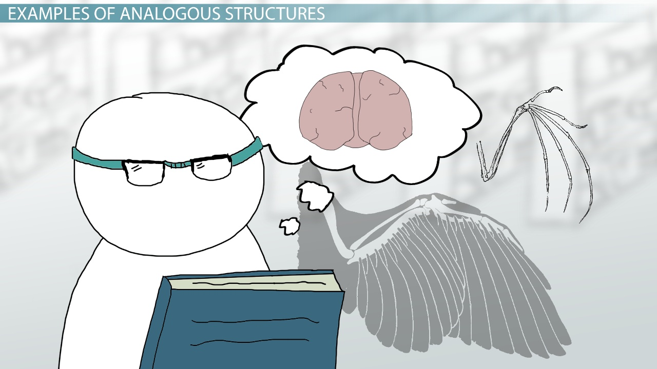 Analogous Structures Definition Examples Video Lesson