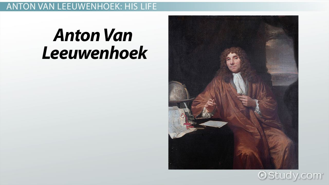 Leeuwenhoek Discoveries | www.imgkid.com - The Image Kid ...