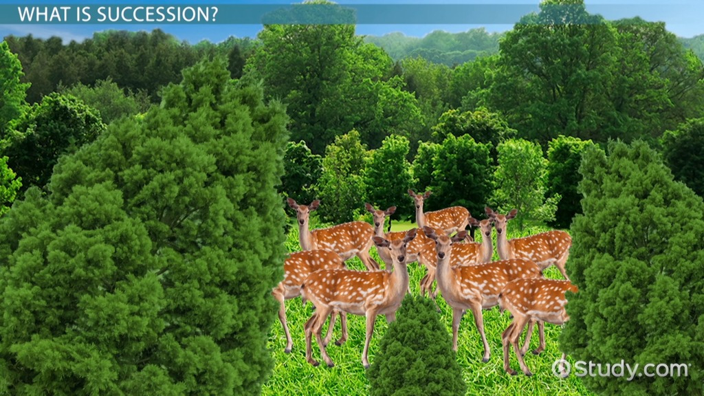 What Is Succession In Biology Definition Examples Video