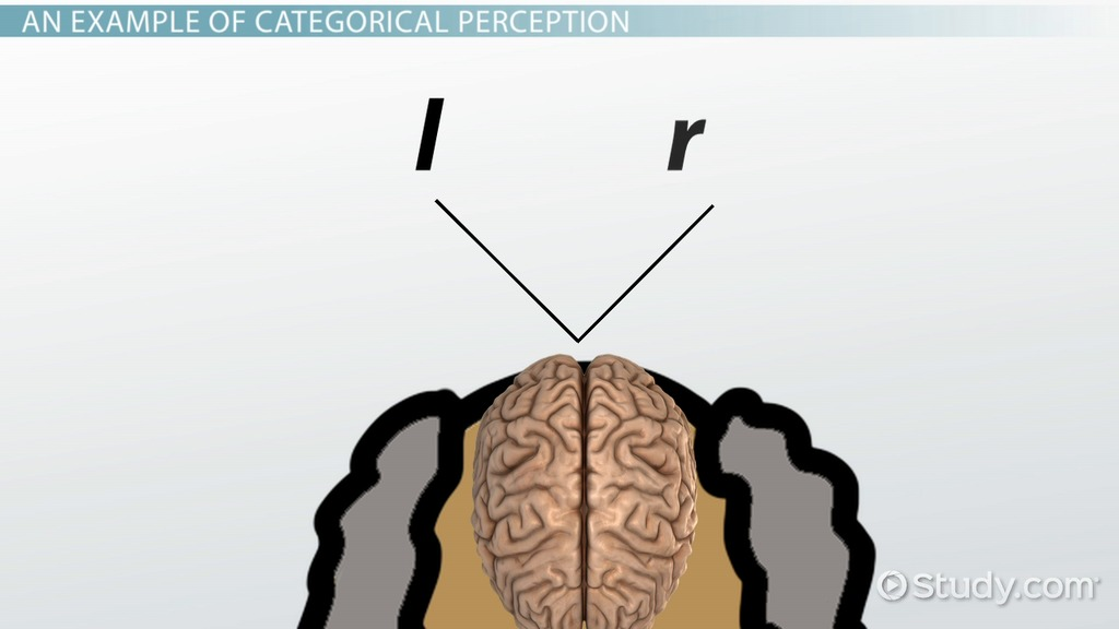 essays on perception checking I will inform the audience in 3 ways, why perception checking is a good tool to help people understand others perception checking is just like looking at different.