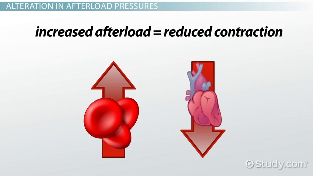 Cardiac Afterload Definition Reducing Agents Video Lesson