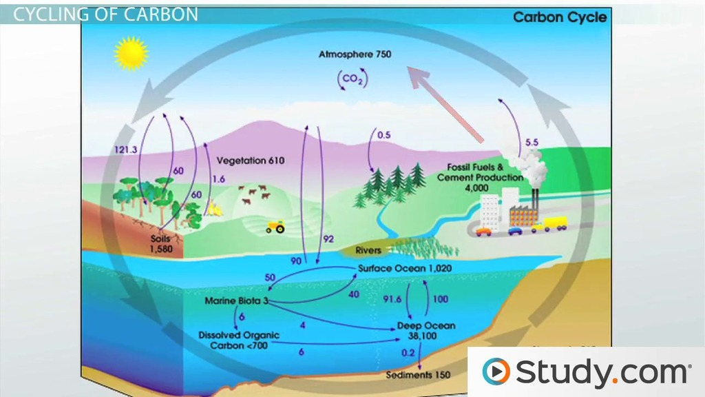 The Carbon Cycle and LongTerm Carbon Storage Video Lesson – Carbon Cycle Worksheet High School