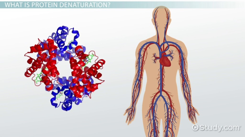denaturation of protein definition causes video lesson transcript studycom