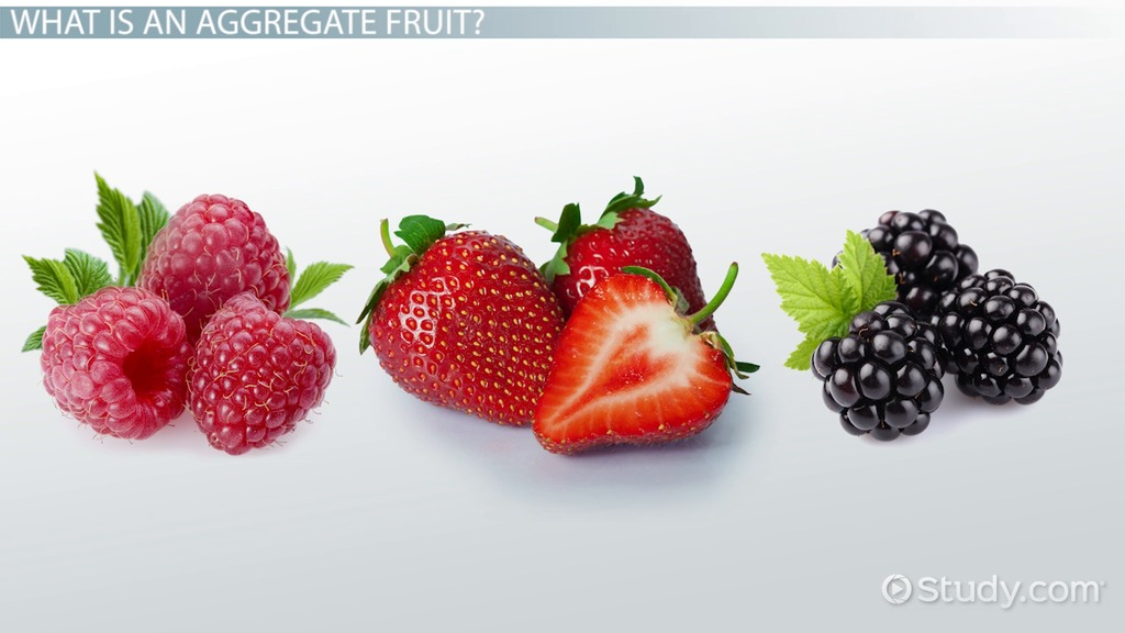 Aggregate Fruit Definition Amp Examples Video Amp Lesson