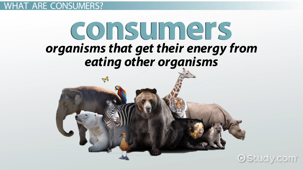Producers consumers decomposers in ecosystems video lesson ecology consumer definition explanation robcynllc Gallery