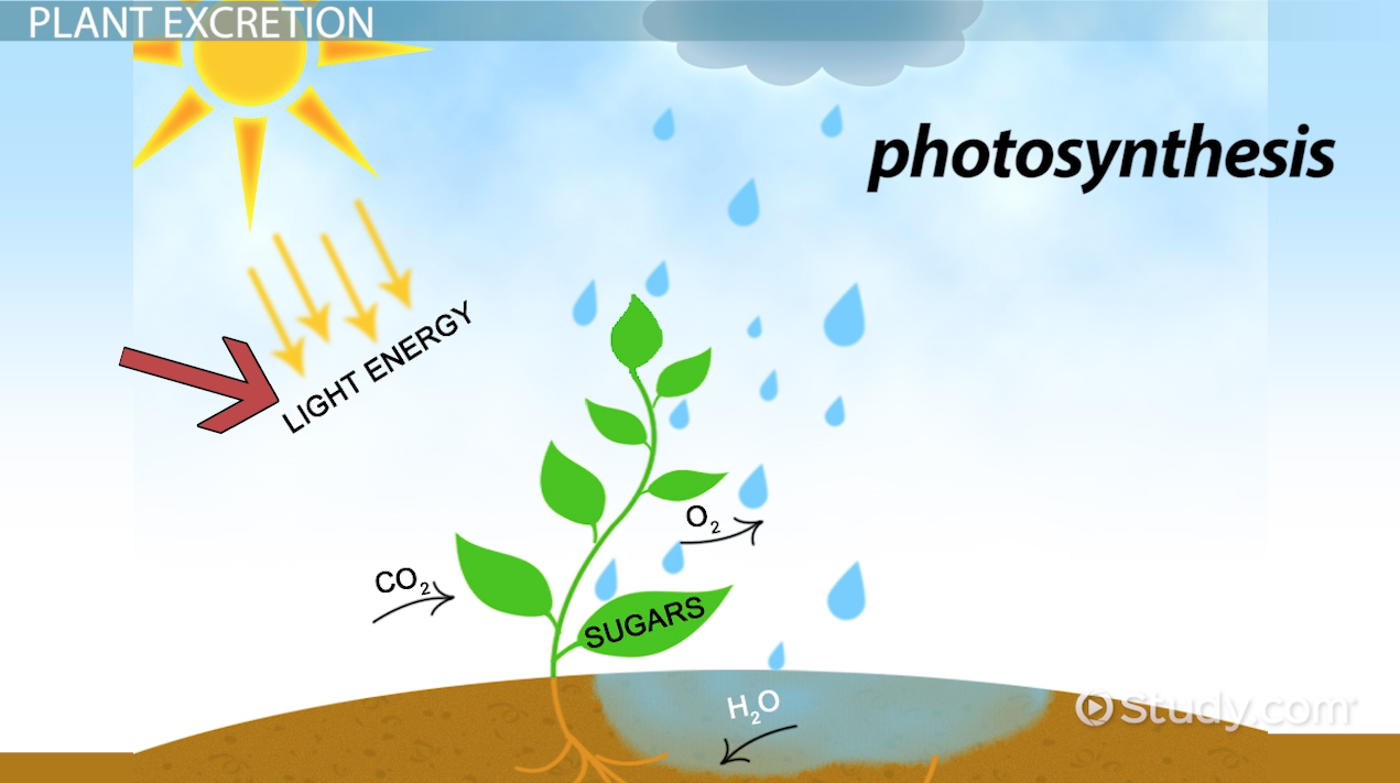 examples of photosynthesis Find out what the products of photosynthesis are and view the overall chemical reaction and equation.