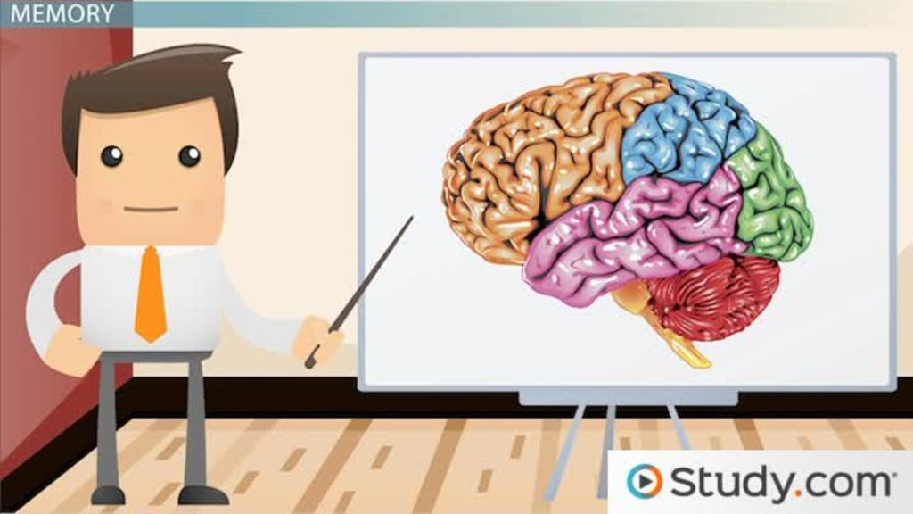 Factors Influencing Memory: Definition, Types & Examples - Video ...