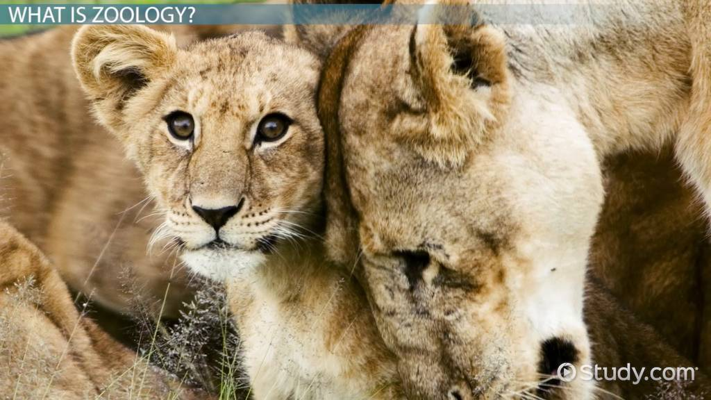 What Is Zoology? - Definition, Branches & Tools - Video & Lesson